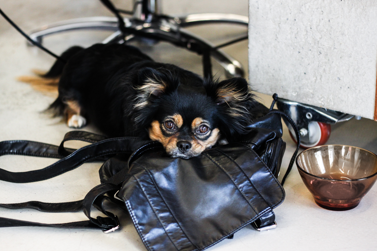 Franziska Elea Blogger Mode Lifestyle Beauty Granny Hair graue Haare färben Silber Friseur München blond Fashion Blog Modeblogger Hund
